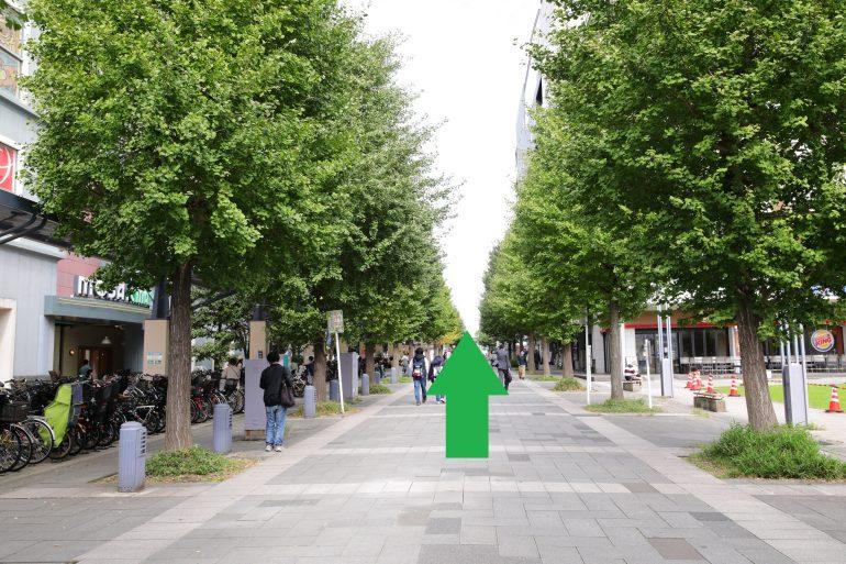 センター北駅前街路樹